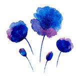 Watercolor poppies. Stock Images