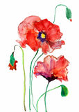 Watercolor poppy Stock Photography