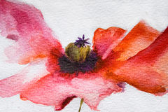 Watercolor Poppy flower Stock Photos
