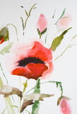 Watercolor Poppy flower Royalty Free Stock Photography