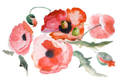 Watercolor Poppy flower Stock Photography
