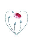 Watercolor poppy flower heart on white background Royalty Free Stock Photo