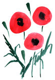 Watercolor poppy flowers impression painting. In white background Royalty Free Illustration