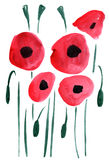 Watercolor poppy flowers impression painting. In white background Vector Illustration