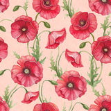 Watercolor poppy flowers Stock Images