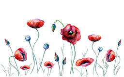 Watercolor poppy flowers. Vecror illustartion Royalty Free Stock Images