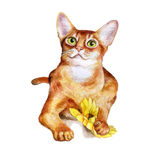 Watercolor portrait of abyssinian cute cat  on white background. Hand drawn sweet home pet Royalty Free Stock Photography