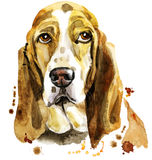 Watercolor portrait of basset hound Stock Photography