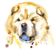 Watercolor portrait of chow-chow dog. Cute Dog. Dog T-shirt graphics. watercolor chow-chow dog illustration Stock Photography