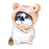 Watercolor portrait of cute kitten in hat with ears  on white background. Hand drawn sweet home pet. Clip art Stock Photos