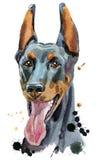 Watercolor portrait doberman. Cute Dog. Dog T-shirt graphics. watercolor doberman illustration vector illustration
