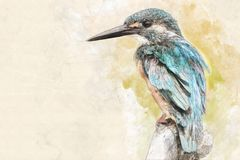 Watercolor portrait of a kingfisher royalty free illustration