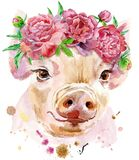 Watercolor portrait of mini pig. A beautiful pig in a wreath of peonies. Flowers. Watercolor illustration with splashes Stock Photography