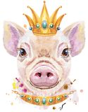Watercolor portrait of mini pig with crown. Cute piggy. Pig for T-shirt graphics. Watercolor pink mini pig illustration with crown royalty free illustration