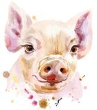 Watercolor portrait of mini pig. Cute piggy. Pig for T-shirt graphics. Watercolor pink mini pig illustration Royalty Free Stock Photos