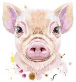 Watercolor portrait of mini pig. Cute piggy. Pig for T-shirt graphics. Watercolor pink mini pig illustration vector illustration
