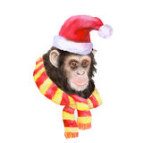 Watercolor portrait of monkey in Santa hat and cool scarf Royalty Free Stock Image