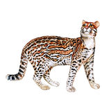 Watercolor portrait of ocelot cat with dots, stripes  on white background. Hand drawn detailed sweet home pet Stock Photography