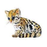 Watercolor portrait of ocelot kitten with dots, stripes  on orange background. Hand drawn detailed home pet Royalty Free Stock Photo
