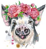 Watercolor portrait of pig. A beautiful pig in black spots in a wreath of peonies. Flowers. Watercolor illustration with splashes Royalty Free Stock Image