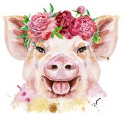 Watercolor portrait of pig. A beautiful pig in a wreath of peonies. Flowers. Watercolor illustration with splashes Royalty Free Stock Photos