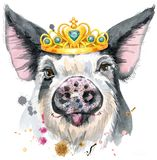 Watercolor portrait of pig. Cute piggy. Pig for T-shirt graphics. Watercolor pig with crown in black spots illustration Royalty Free Stock Images