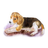 Watercolor portrait of popular English beagle dog  on white background. Hand drawn sweet home pet Stock Images