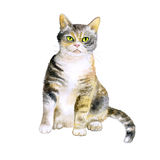 Watercolor portrait of rare exotic American wirehair cat  on white background. Hand drawn detailed sweet home pet. Bright colors, realistic look. Greeting card Stock Photos