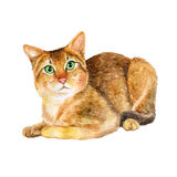 Watercolor portrait of rare exotic Chausie jungle cat  on white background. Hand drawn detailed sweet home pet. Bright colors, realistic look. Greeting card Royalty Free Stock Photo
