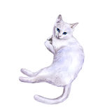 Watercolor portrait of rare exotic Khao Manee, Diamond Eye cat  on white background. Hand drawn detailed sweet home pet. Bright colors, realistic look Royalty Free Stock Photos