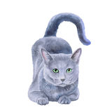Watercolor portrait of rare exotic Nebelung cat, Longhaired Russian Blue. On white background. Hand drawn detailed sweet home pet. Bright colors, realistic Stock Photo