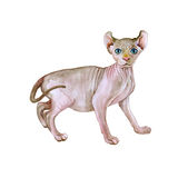 Watercolor portrait of rare hairless Elf cat  on white background. Hand drawn detailed sweet home pet. Bright colors, realistic look. Greeting card design Royalty Free Stock Photos