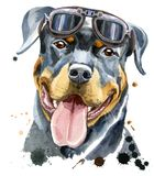 Watercolor portrait of rottweiler. Cute Dog. Dog T-shirt graphics. Watercolor rottweiler with glasses royalty free illustration