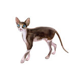 Watercolor portrait of sphynx black and white no hair cat  on white background. Hand drawn sweet home pet. Bright colors, realistic look. Greeting card design Royalty Free Stock Photography