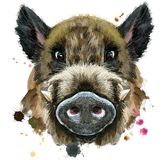 Watercolor portrait of wild boar. Cute piggy. Wild boar for T-shirt graphics. Watercolor brown boar illustration Stock Image