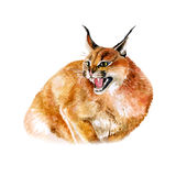 Watercolor portrait of wild caracal cat with black ears Stock Photo