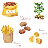 Watercolor potato set
