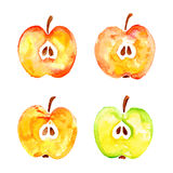 Watercolor prints cut four apples Royalty Free Stock Photography