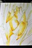 Watercolor in Progress Royalty Free Stock Image