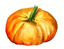 Watercolor pumpkin Royalty Free Stock Photos