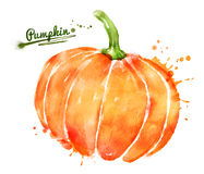 Watercolor pumpkin Stock Photo