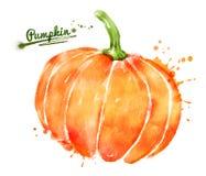 Watercolor pumpkin Stock Photo