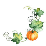 Watercolor pumpkin, hand-drawn isolated elements stock image