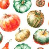 Watercolor pumpkin. Stock Photography