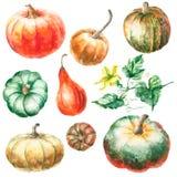 Watercolor pumpkin. Royalty Free Stock Photo
