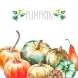 Watercolor pumpkin. Royalty Free Stock Image