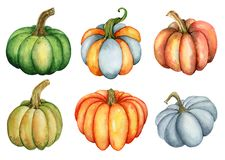 Watercolor pumpkin illustration isolated on the white background Royalty Free Stock Image