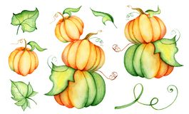 Watercolor pumpkin illustration isolated on the white background Royalty Free Stock Photos