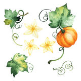 Watercolor pumpkin, isolated elements royalty free stock images