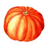 Watercolor pumpkin Royalty Free Stock Photography